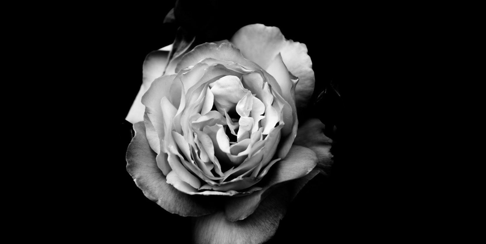 rosa blanco y negro